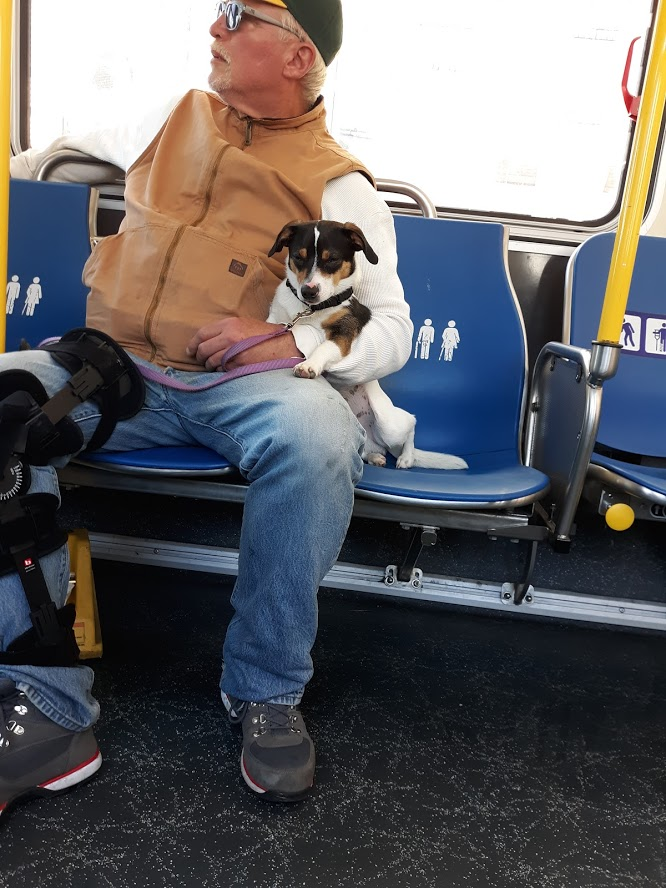 Dogs on Muni II 5.20.2019