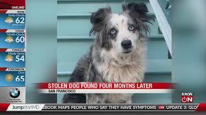 Dog found II 4.21.2020