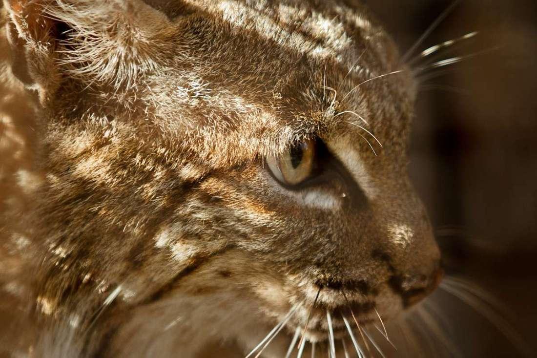 Mendocino animal kill II 7.14.2020.jpg