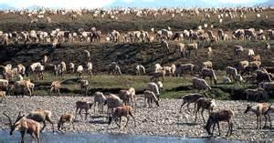 alaska wildlife refuge I 8.17.2020