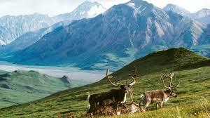 alaska wildlife refuge III 8.17.2020.jpg
