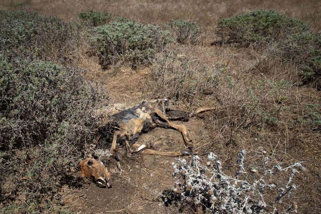 Tule Elk II 9.1.2020