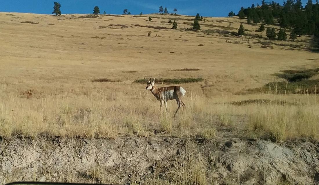 Montana National Bison Range 9.16.2017.jpg