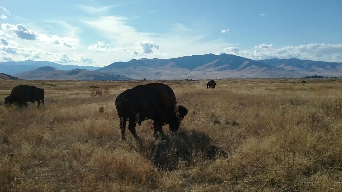National Bison Range 9.16.2017.jpg