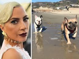 Lady Gaga Bulldogs II 2.26.2021.jpg