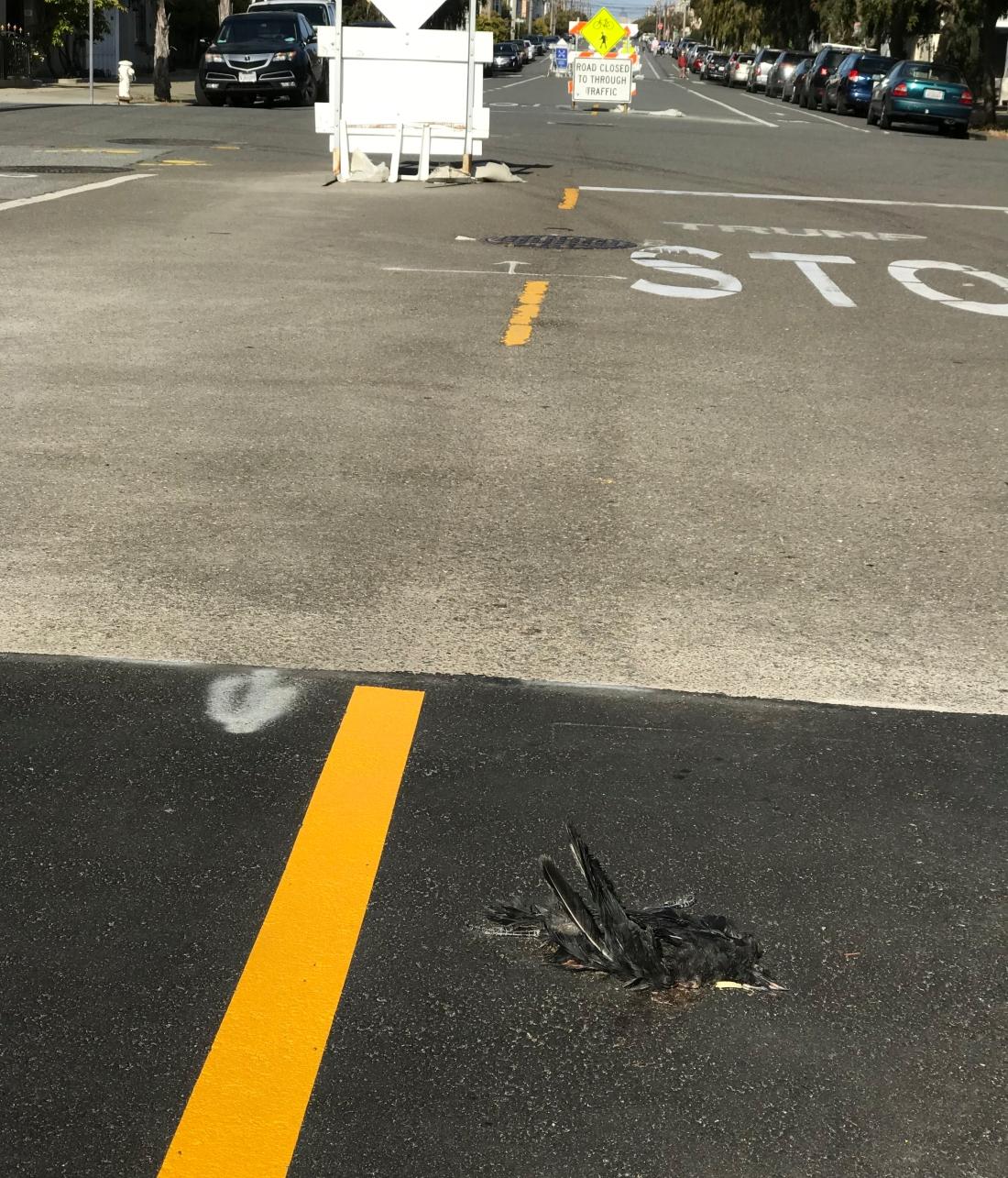 12-slow-streets-dead-bird-5.28.2021-1.jpg