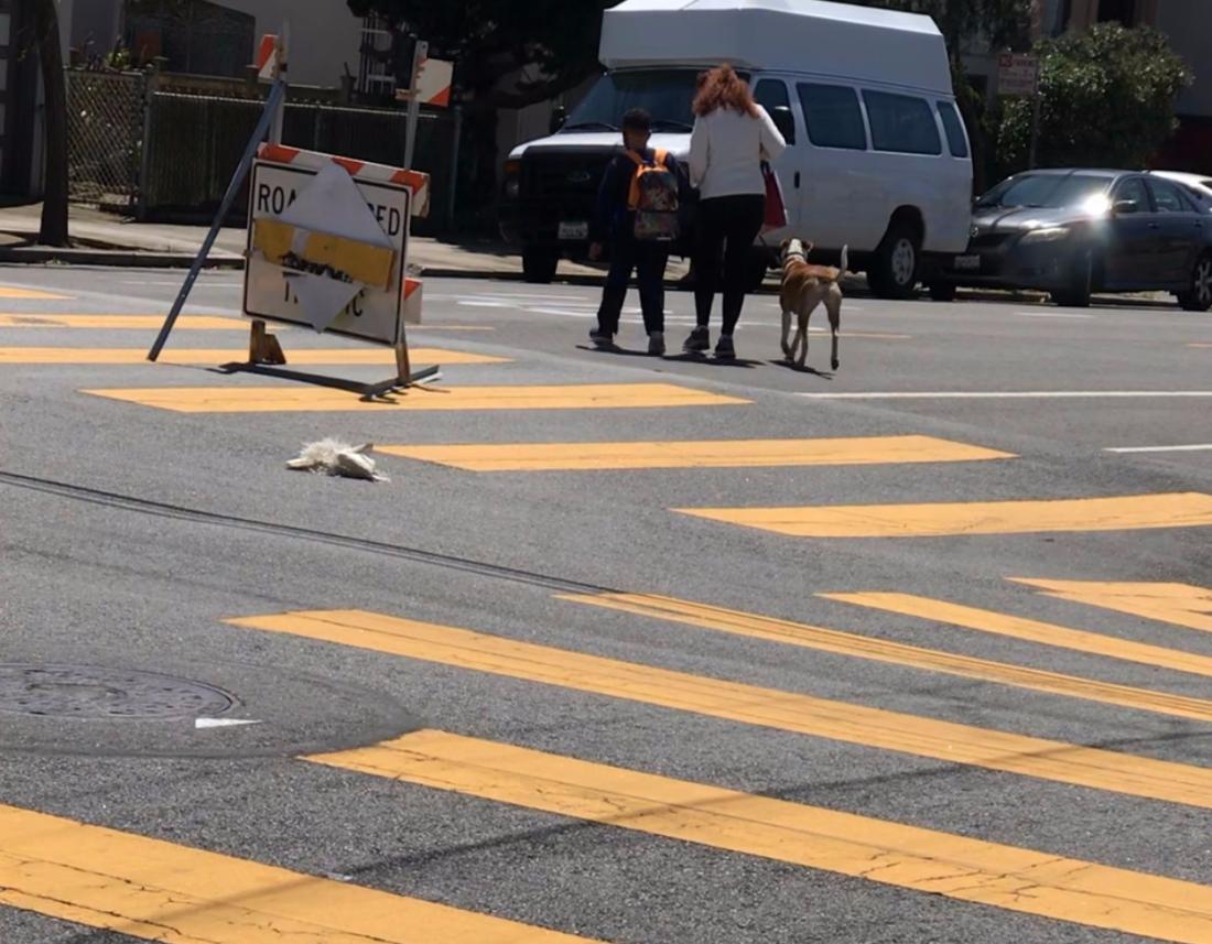 9-slow-streets-walking-the-dog-5.24.2021-e1621903152623.jpg