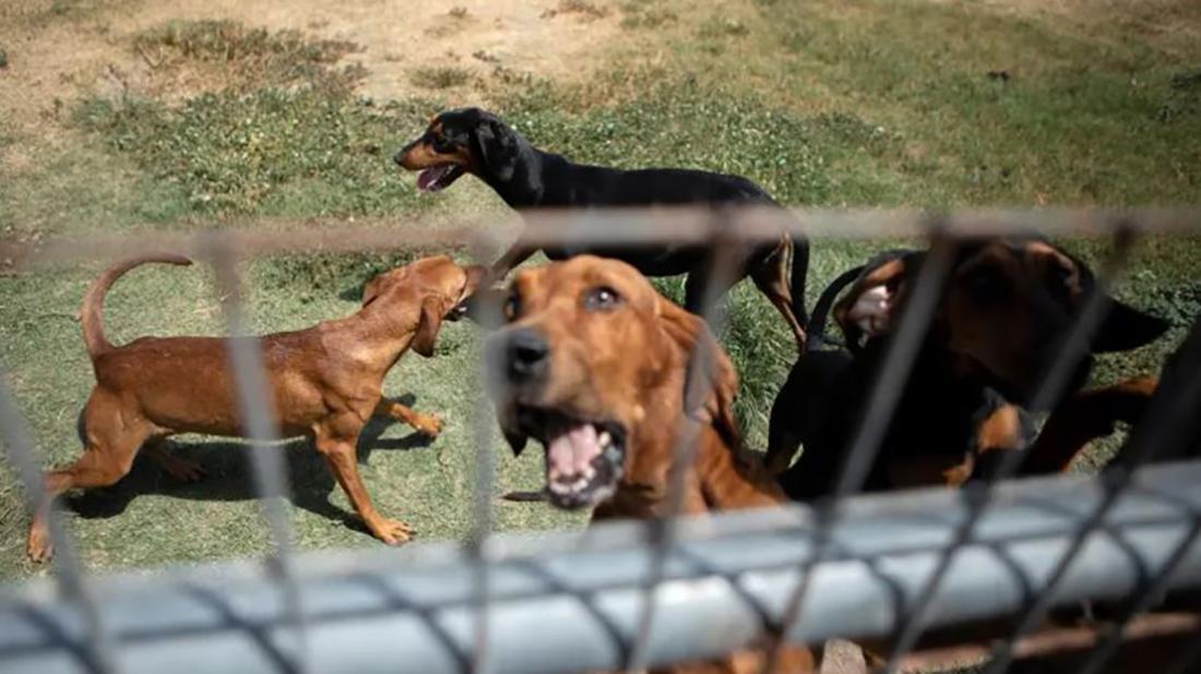 Texas dog veto I 6.22.2021.jpg