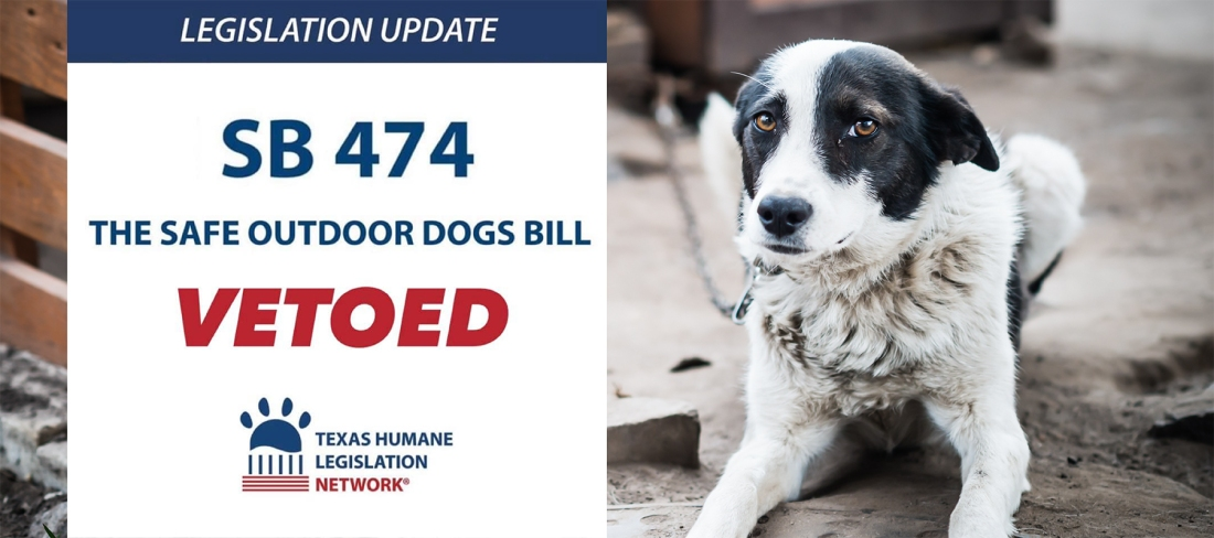 Texas dog veto II 6.22.2021.jpg