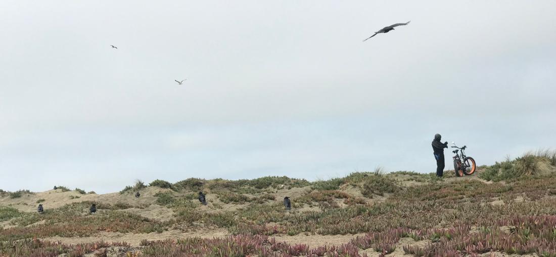 19-gw-man-birds-bike.jpg